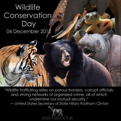 Essay on Wildlife and Conservation | Paragraph on Wildlife and Conservation | Speech on Wildlife and Conservation | How To Conserve Wild Life